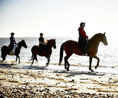 TTDA - Pakefield Riding School - horses in sea