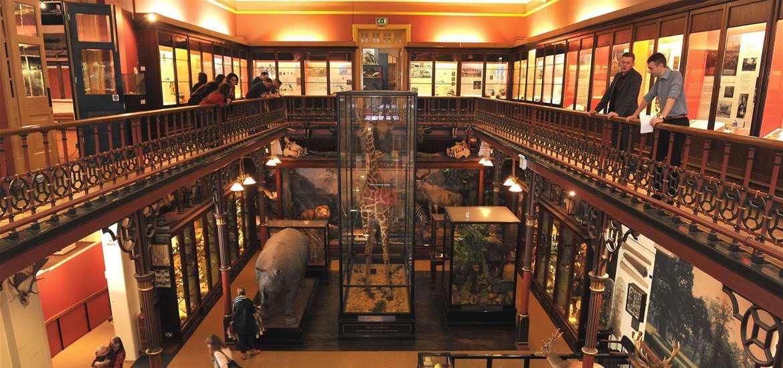 TTDA - Ipswich Museums - Gallery landing