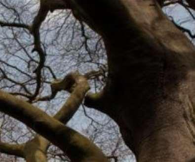 Winter Tree ID at..