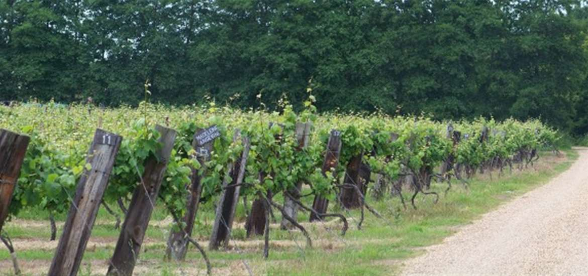 Wine tasting on The Suffolk Coast