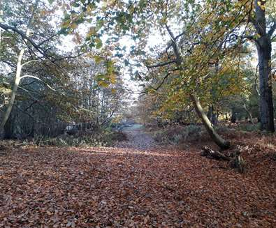 Forest Bathing at RSPB Minsmere